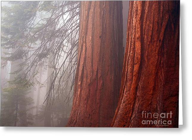 Fog In The Redwood Forest Sequoia National Park Greeting Card
