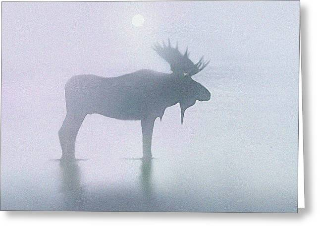 Fog Moose Greeting Card by Robert Foster