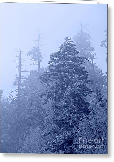 Greeting Card featuring the photograph Fog On The Mountain by John Stephens