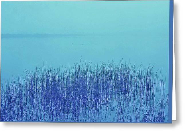 Greeting Card featuring the photograph Fog Reeds by Laurie Stewart