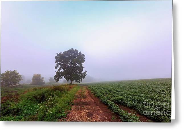 Fog Sometimes Succumbs Greeting Card