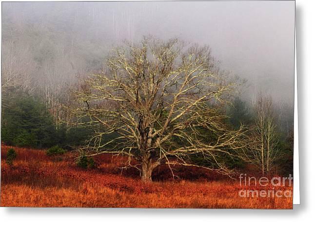 Fog Tree Greeting Card by Geraldine DeBoer