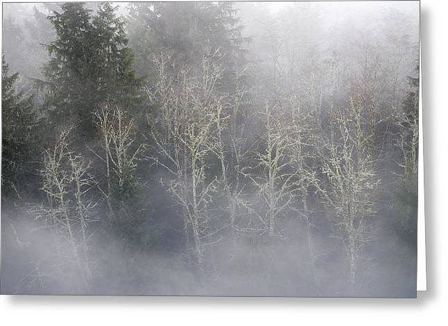 Foggy Alders In The Forest Greeting Card