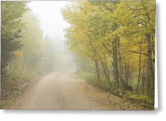 Foggy Dirt Road In The Autumn Season Greeting Card