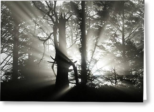Foggy Flares Greeting Card