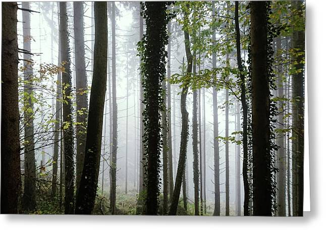 Foggy Forest Greeting Card by Chevy Fleet