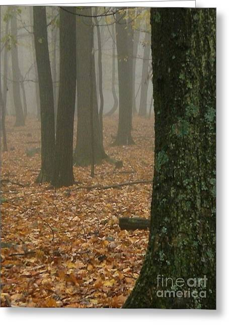 Foggy Forest  Greeting Card by Joshua Bales