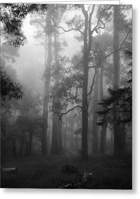 Foggy Forest Greeting Card by Lois Romer