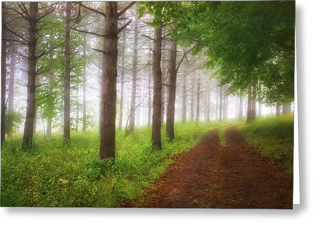 Foggy Forest - Retzer Nature Center Trails Greeting Card by Jennifer Rondinelli Reilly - Fine Art Photography