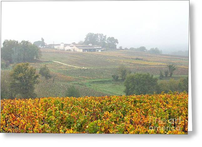 Foggy French Vineyard Greeting Card