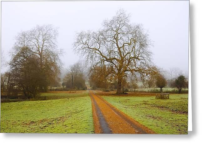 Magneta Greeting Cards - Foggy Landscape Greeting Card by Svetlana Sewell