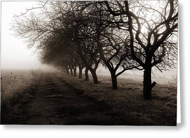 Foggy Lane Greeting Card