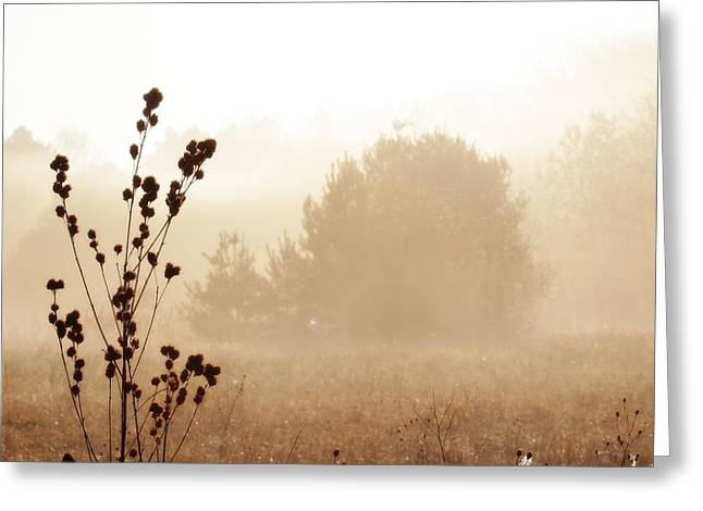 Greeting Card featuring the photograph Foggy Meadow 2 by Scott Hovind