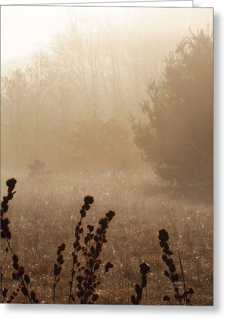 Greeting Card featuring the photograph Foggy Meadow by Scott Hovind