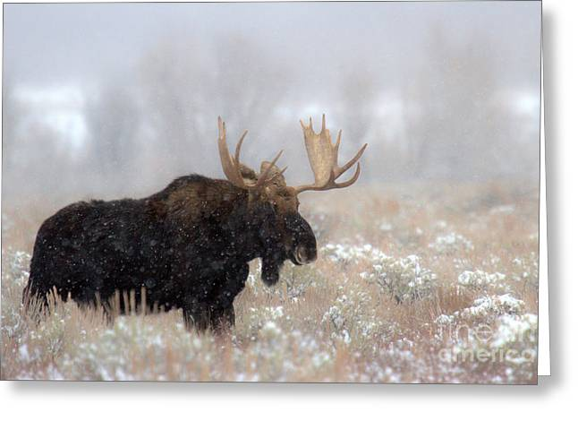 Foggy Moose Silhouette Greeting Card by Adam Jewell