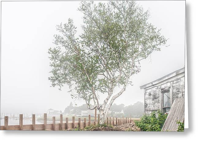 Foggy Morning At Camp Ellis Greeting Card