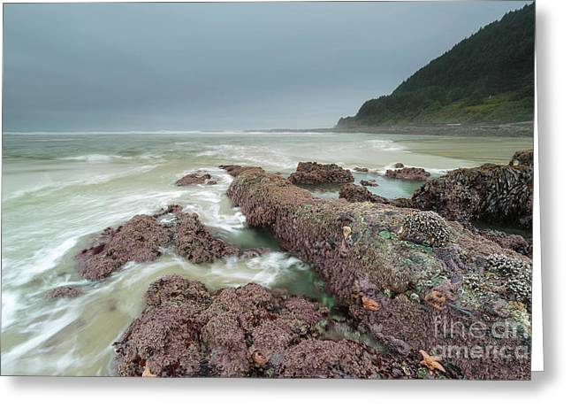 Foggy Morning At Neptune Beach, Oregon Greeting Card by Masako Metz