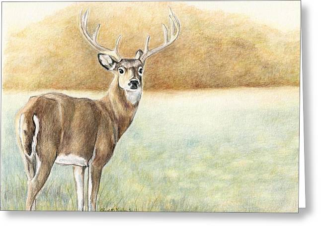 Foggy Morning Buck Greeting Card by Charlotte Yealey