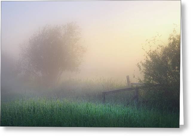 Greeting Card featuring the photograph Foggy Morning by Dan Jurak