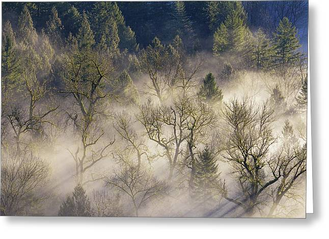 Foggy Morning In Sandy River Valley Greeting Card by David Gn
