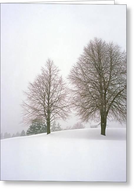 Foggy Morning Landscape 19 Greeting Card by Steve Ohlsen