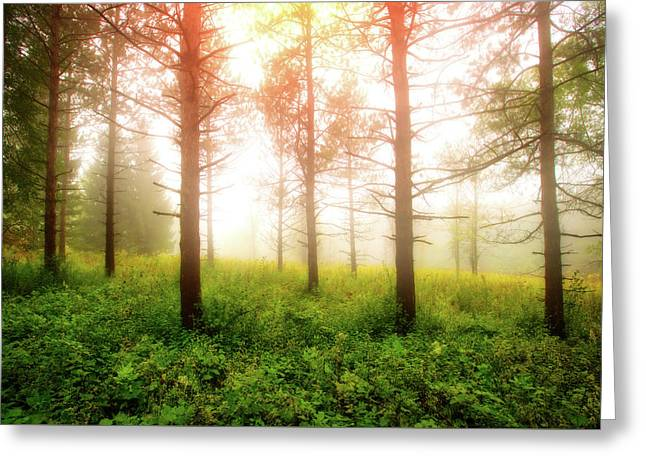 Foggy Morning - Retzer Nature Center Trails Greeting Card by Jennifer Rondinelli Reilly - Fine Art Photography
