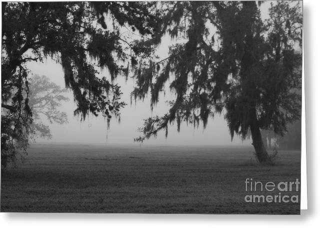 Foggy Morning Study Vii Greeting Card by Paulette B Wright