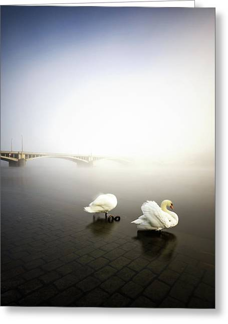 Foggy Morning View Near Bridge With Two Swans At Vltava River, Prague, Czech Republic Greeting Card
