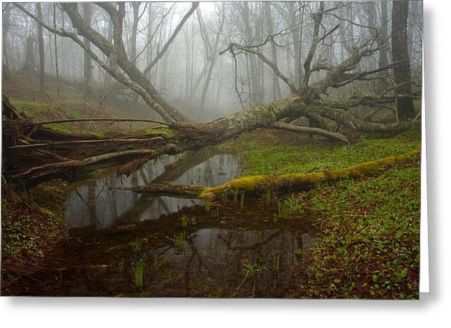Foggy Spring Forest Greeting Card by Irwin Barrett