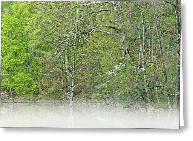 Foggy Spring Shoreline Hall Lake Greeting Card