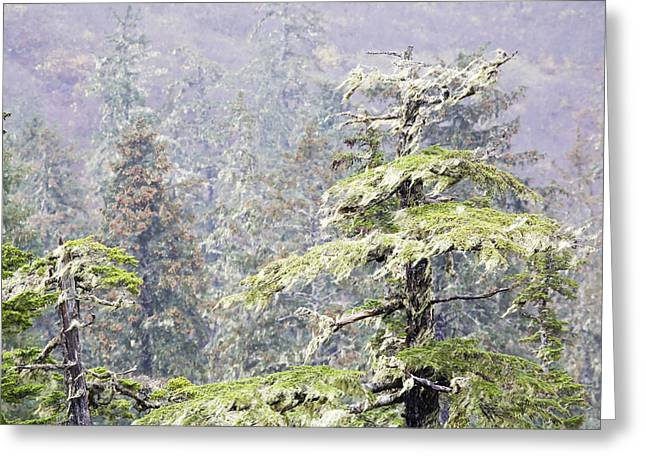 Foggy Tongass Rain Forest Greeting Card by Eggers Photography