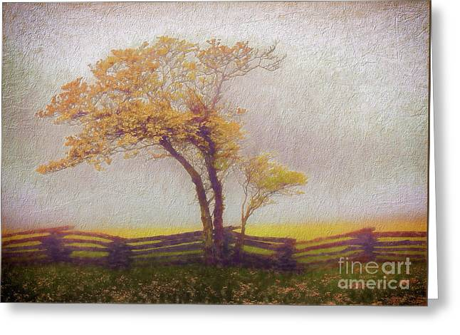 Foggy Tree And Fence In The Blue Ridge Ap Greeting Card