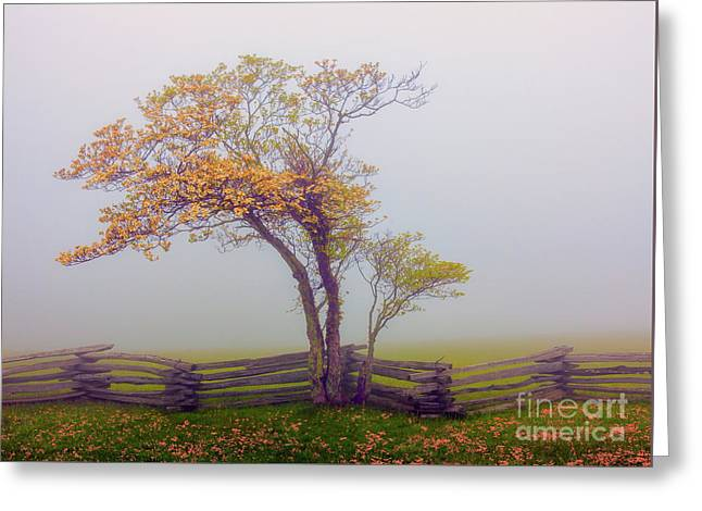 Foggy Tree And Fence In The Blue Ridge Greeting Card