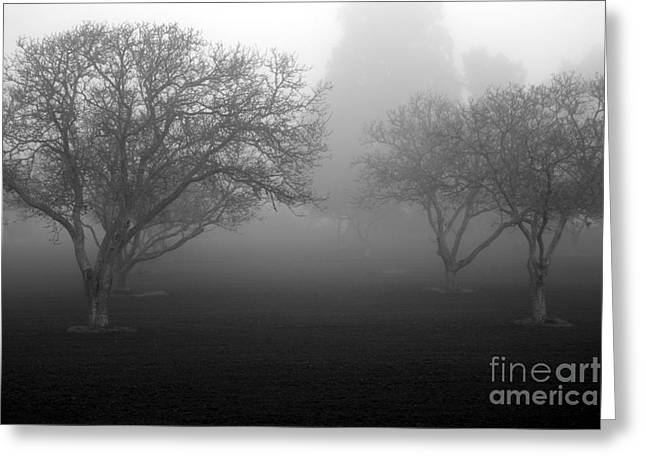 Foggy Trees Greeting Card