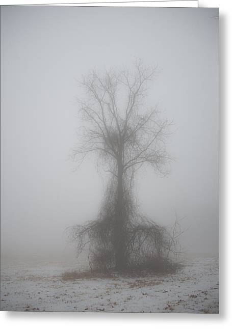 Foggy Walnut Greeting Card
