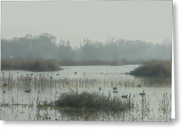 Foggy Wetlands Greeting Card