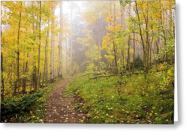 Foggy Winsor Trail Aspens In Autumn - Santa Fe National Forest New Mexico Greeting Card