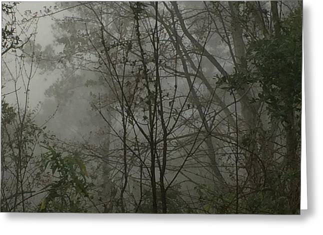 Foggy Woods Photo  Greeting Card by Gina O'Brien