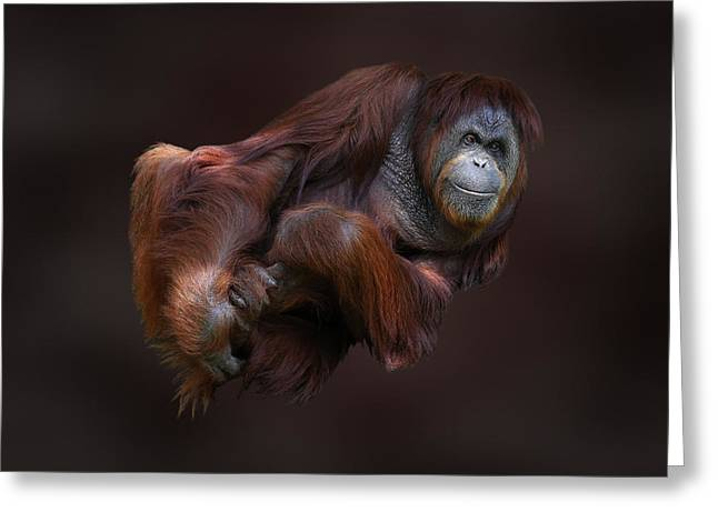 Folded Orangutan Greeting Card