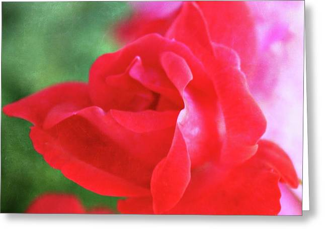 Rose Red City Greeting Cards - Folds of a Rose Greeting Card by Cathie Tyler