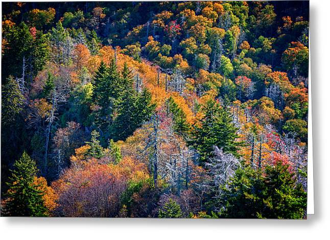 Foliage From Chimney Tops Greeting Card by Rick Berk