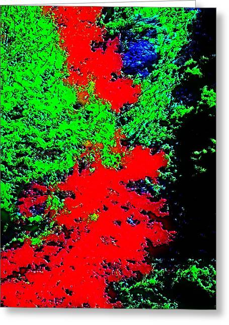 Foliage Trees Dd3 Greeting Card by Modified Image