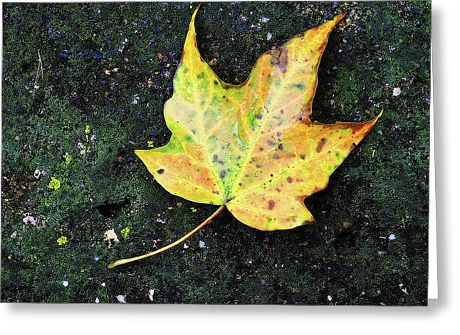Foliation Greeting Card by Tom Druin