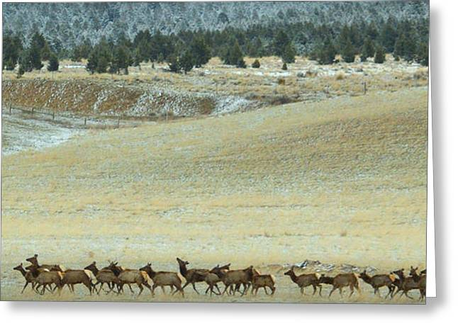 Greeting Card featuring the photograph Follow Me.. by Al  Swasey