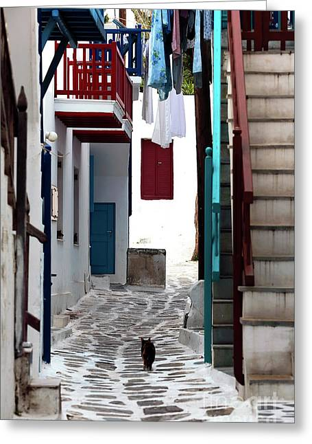 Follow The Cat In Mykonos Greeting Card