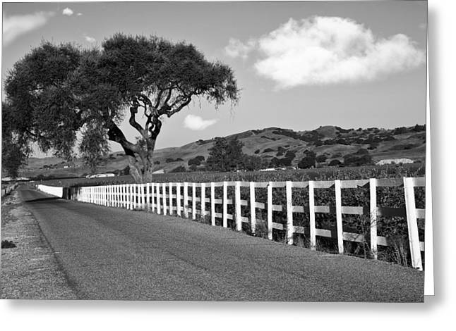 Follow The Fence Greeting Card by Patricia Stalter