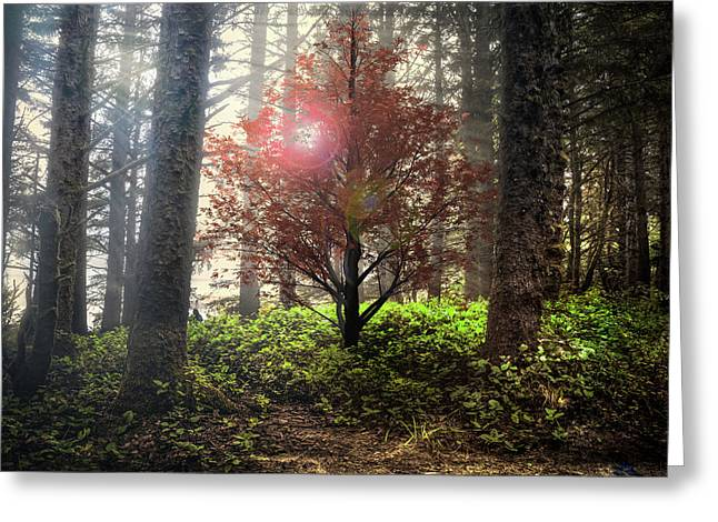 Follow The Light In The Forest Greeting Card