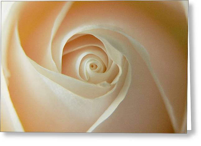 Fondant Rose Spiral Greeting Card by Abigail Markov
