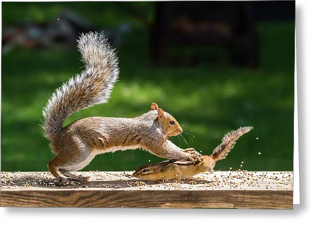 Food Fight Squirrel And Chipmunk Greeting Card