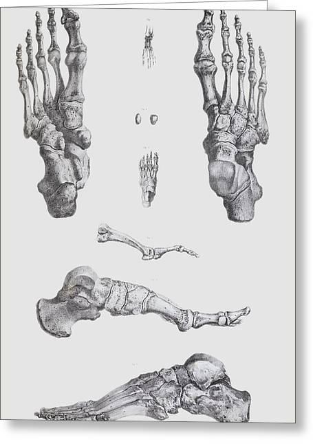 Foot Bones Greeting Card